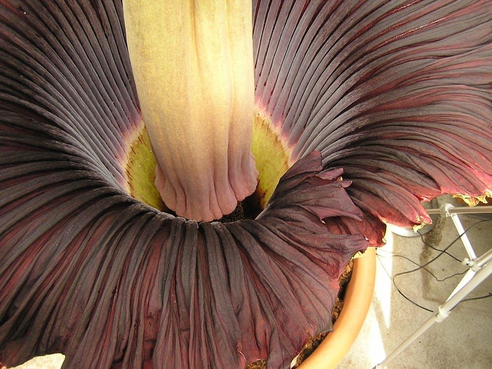 Flower core
