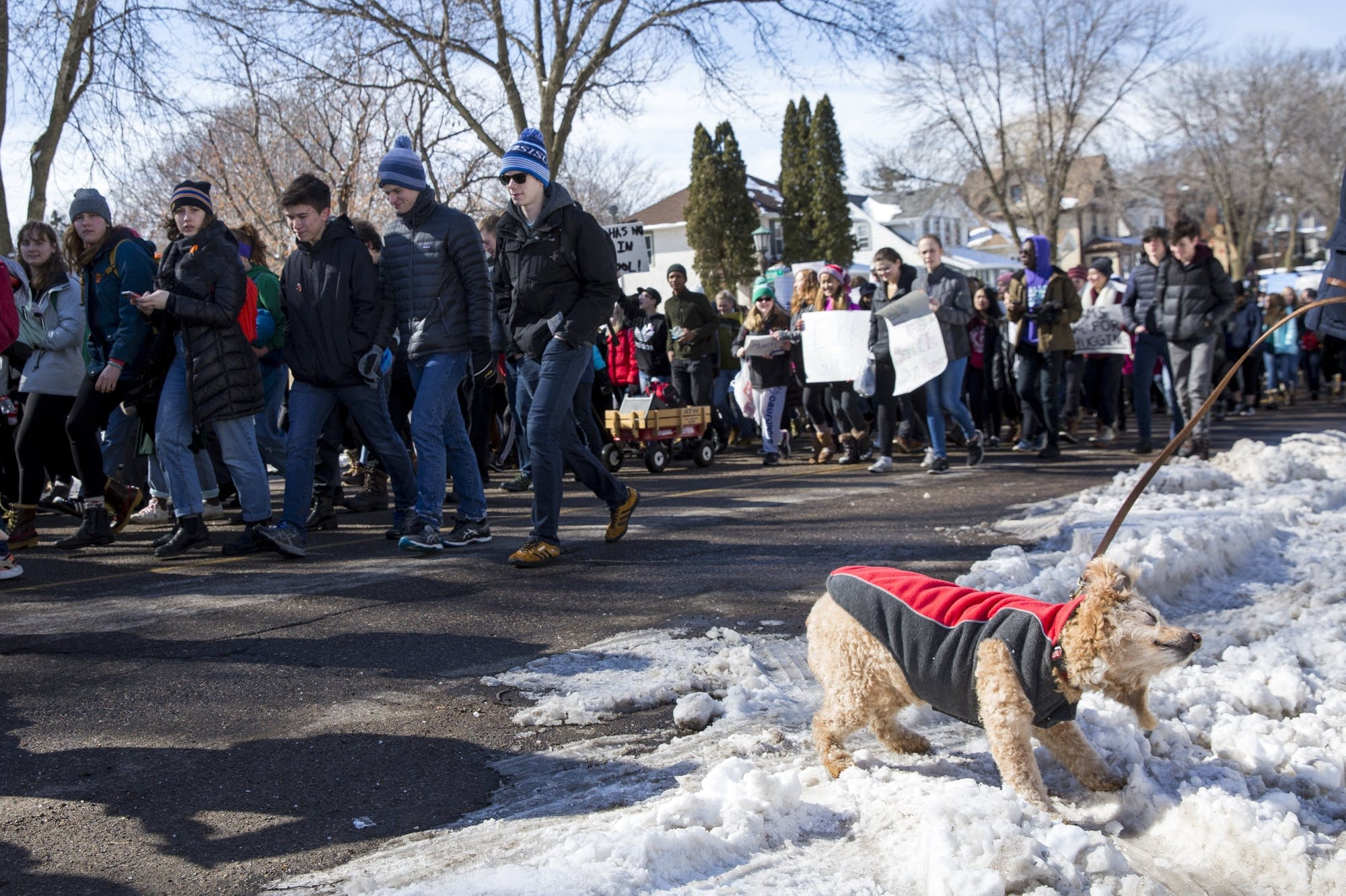 A dog shakes off some snow as protesters march by