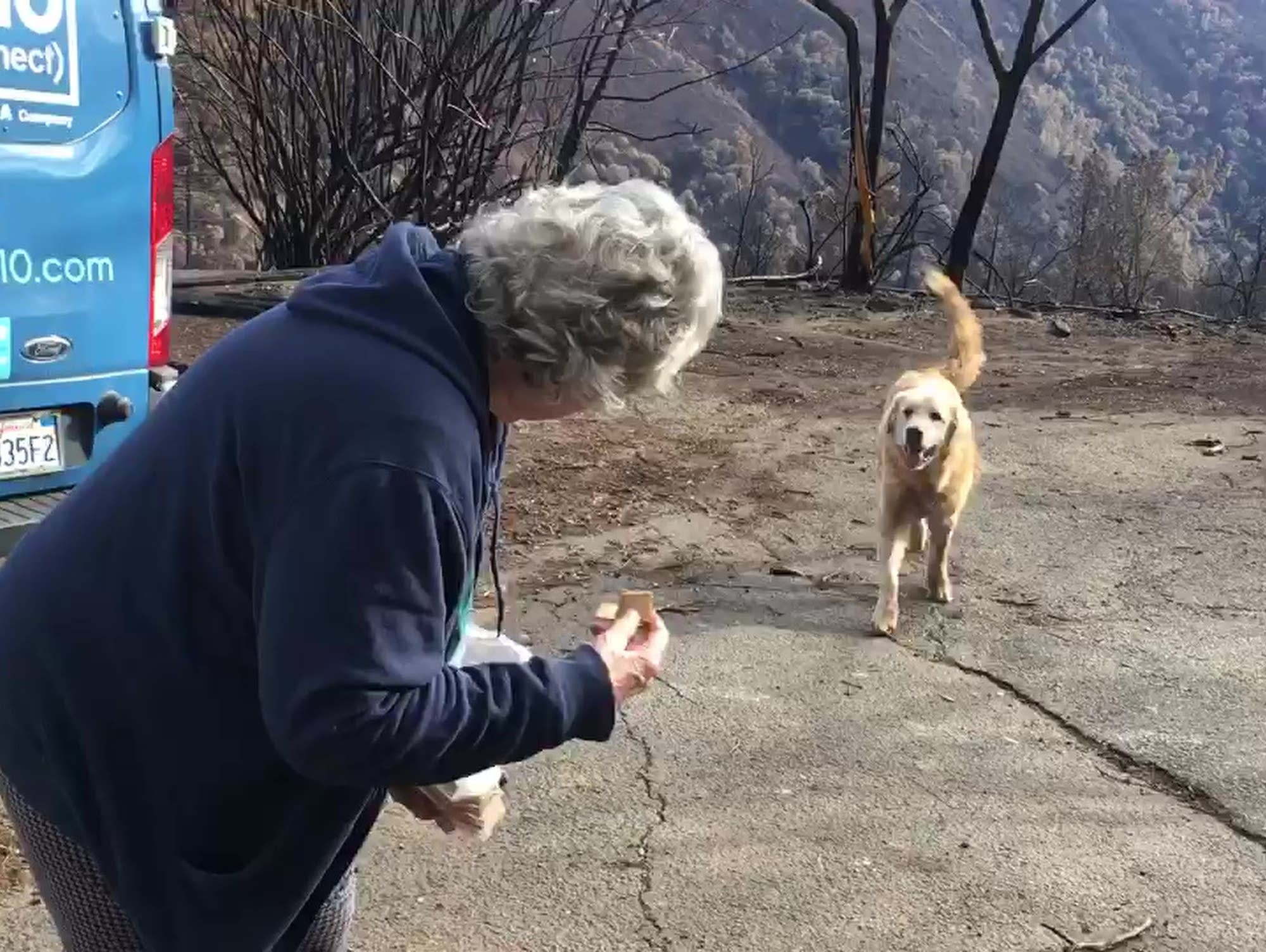 Dog survives California wildfires