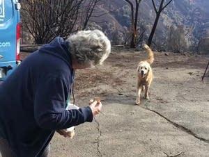 Dog survives California wildfires