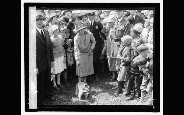 Old b&w photo: Crowd of nicely dressed women around raccoon on leash