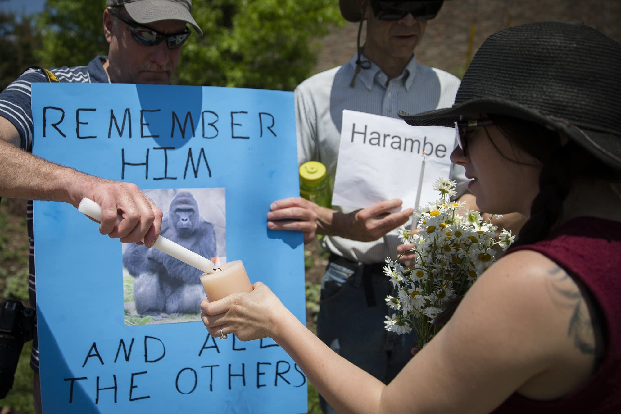 Vigil for a gorilla