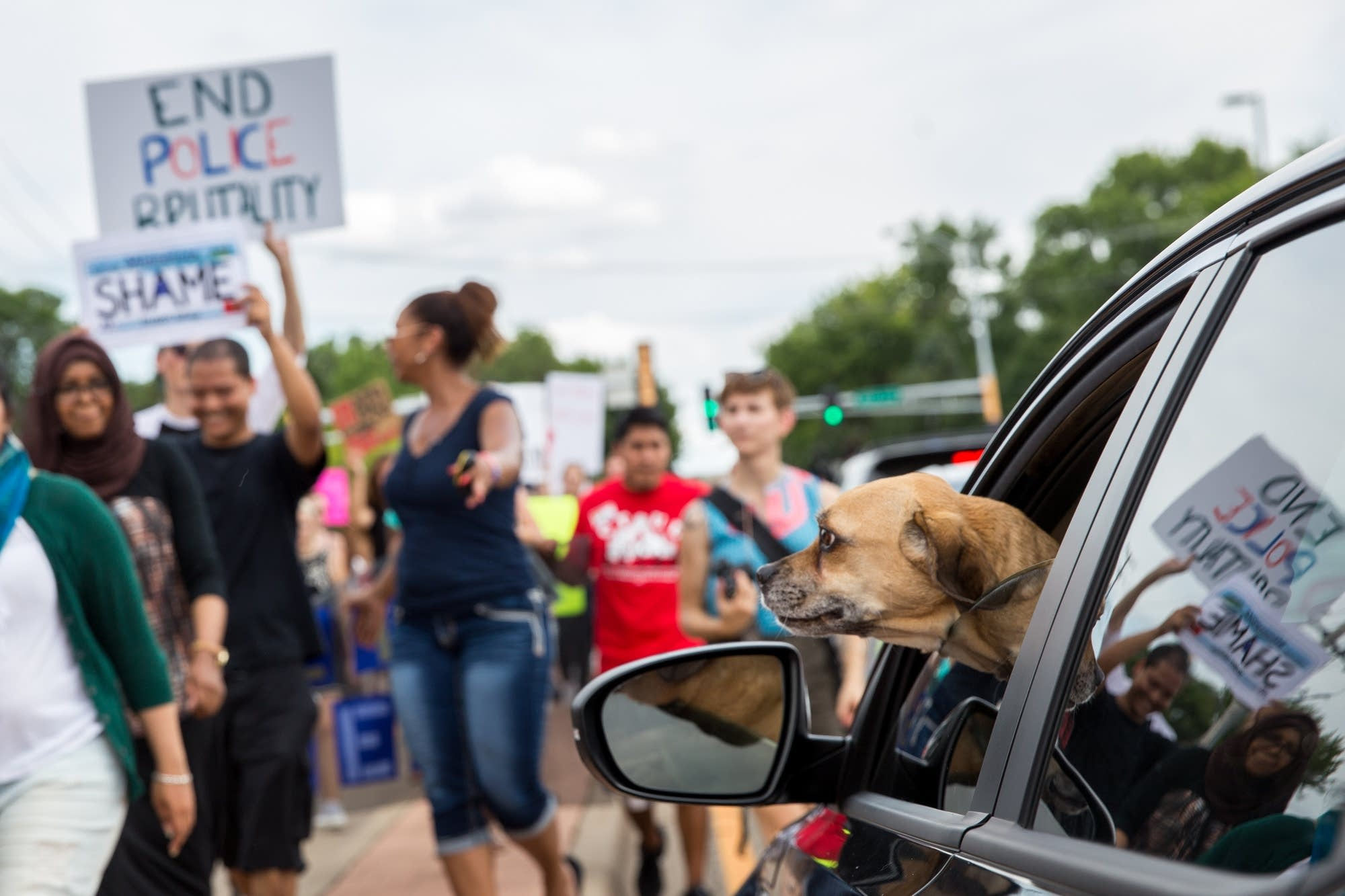 A dog watches protesters.