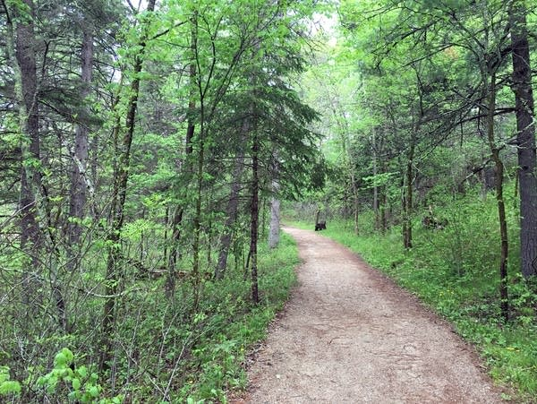 Headwaters trail in Itasca State park