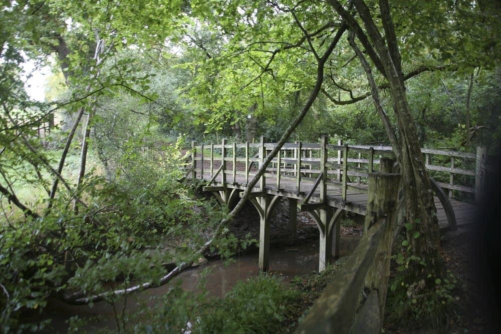 Poohsticks Bridge in Ashdown Forest