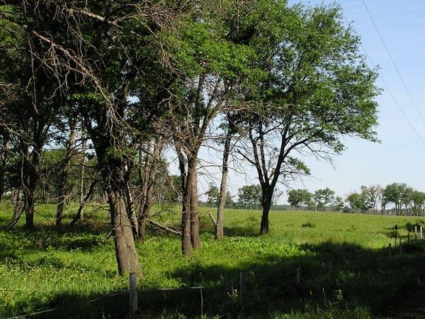 Cedar Creek Reserve