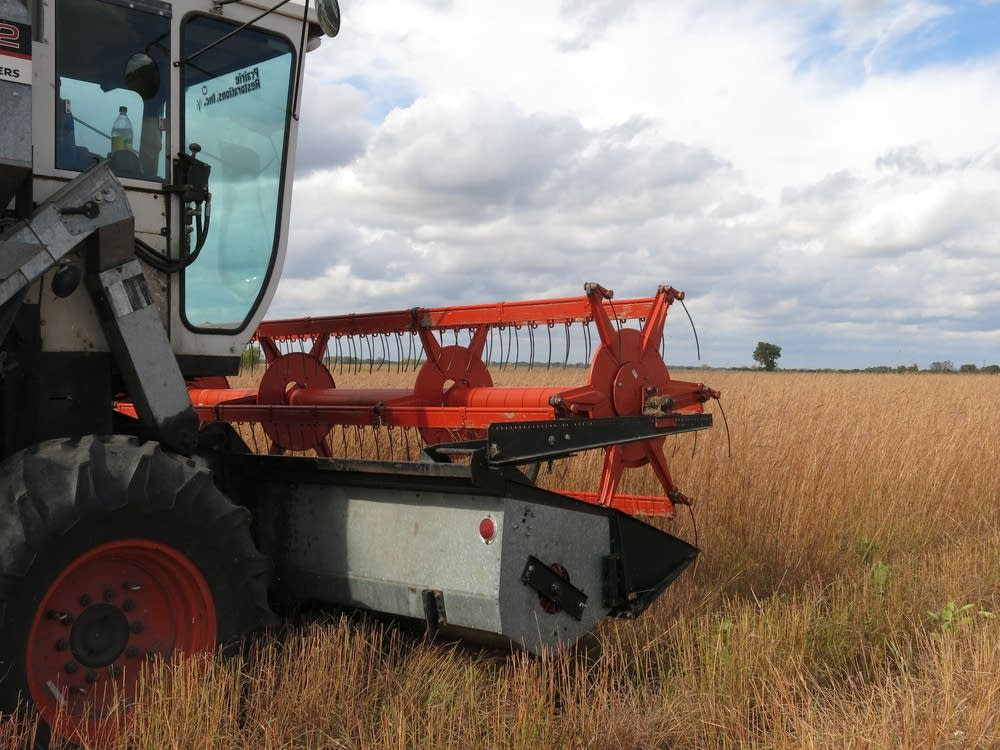 A combine harvesting seeds
