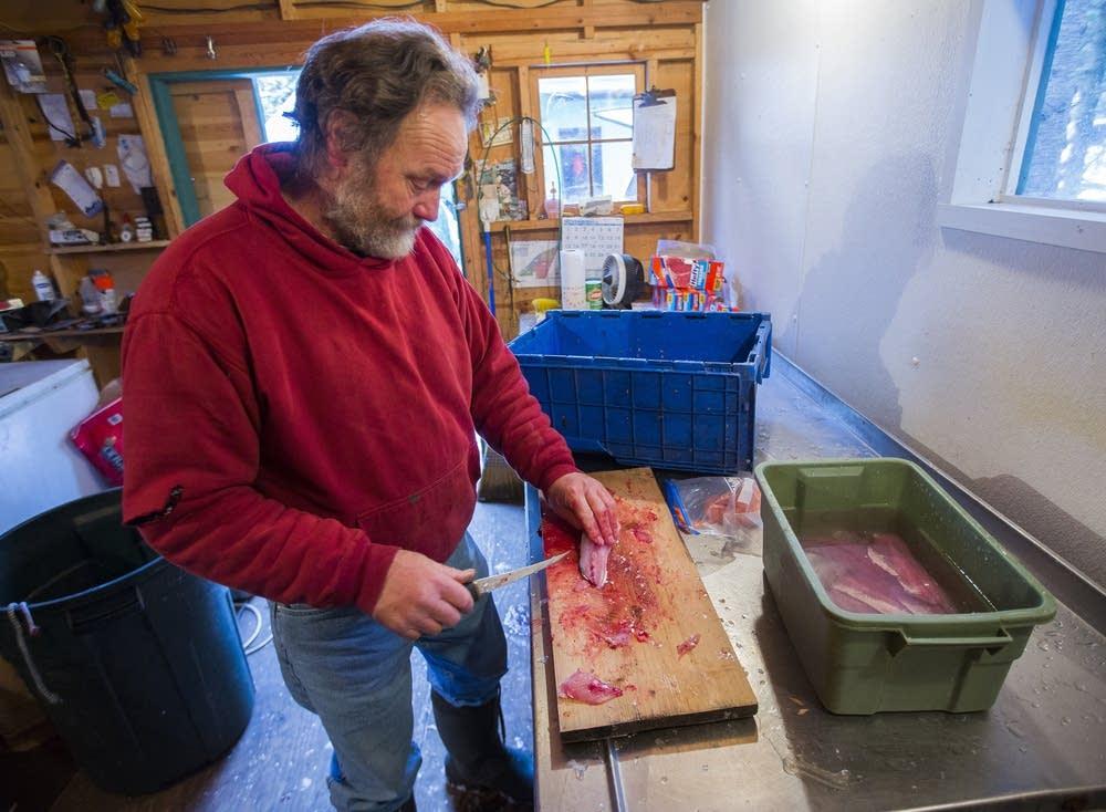 Steve Dahl fillets the day's catch of cisco.