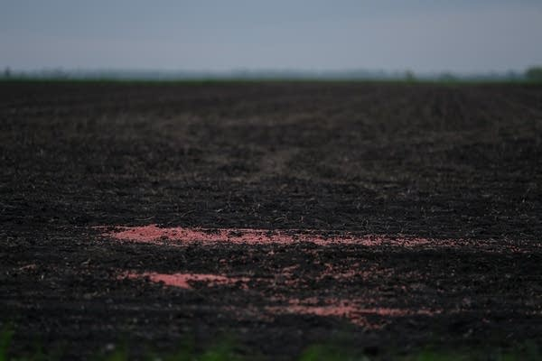 Spilled seed on the edge of a field.