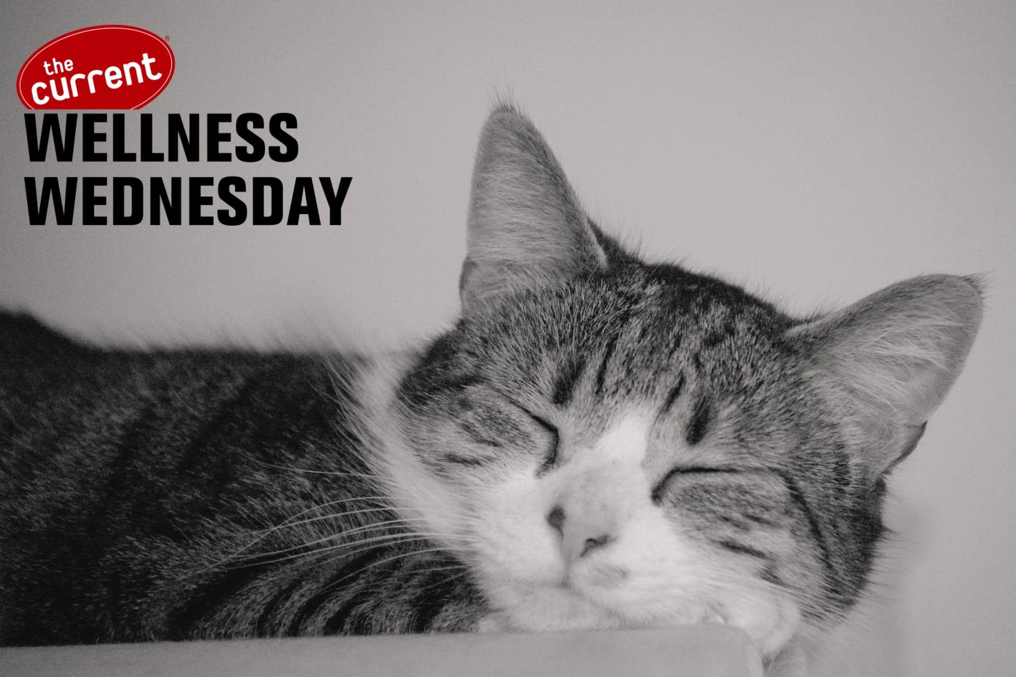 Sleeping cat with Wellness Wednesday logo.