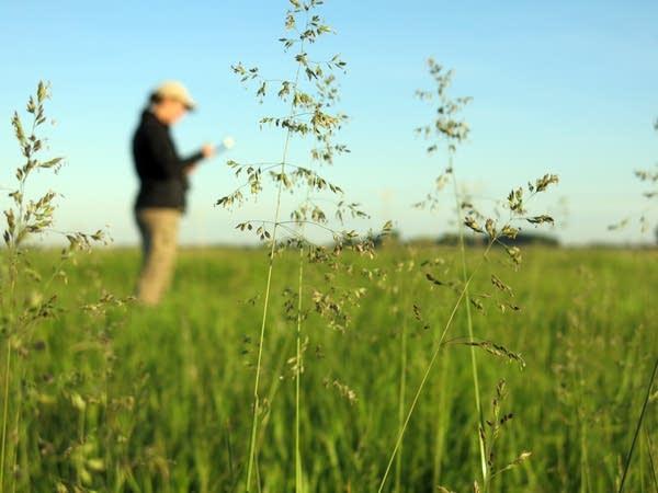 Grassland bird survey