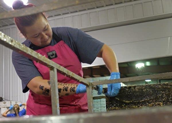 Michelle Esterhuizen loads honey comb on a rack.