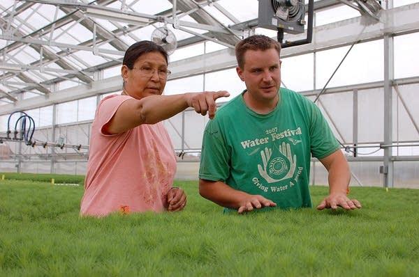 Red Lake seedling greenhouse