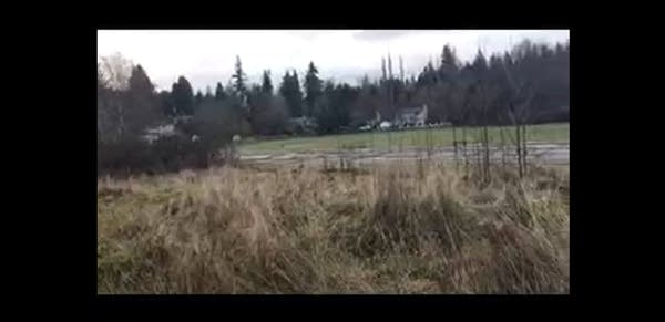 Grainy footage of an abandoned lot w/ weeds and trees