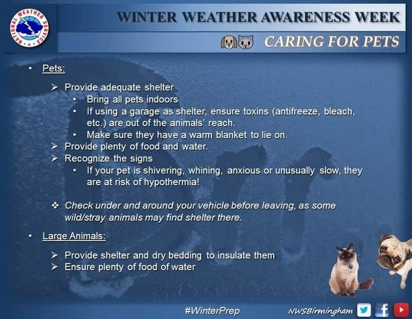 winter safety_pets