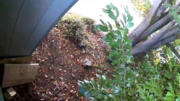 Security Cam footage from above showing discarded boxes in bushes