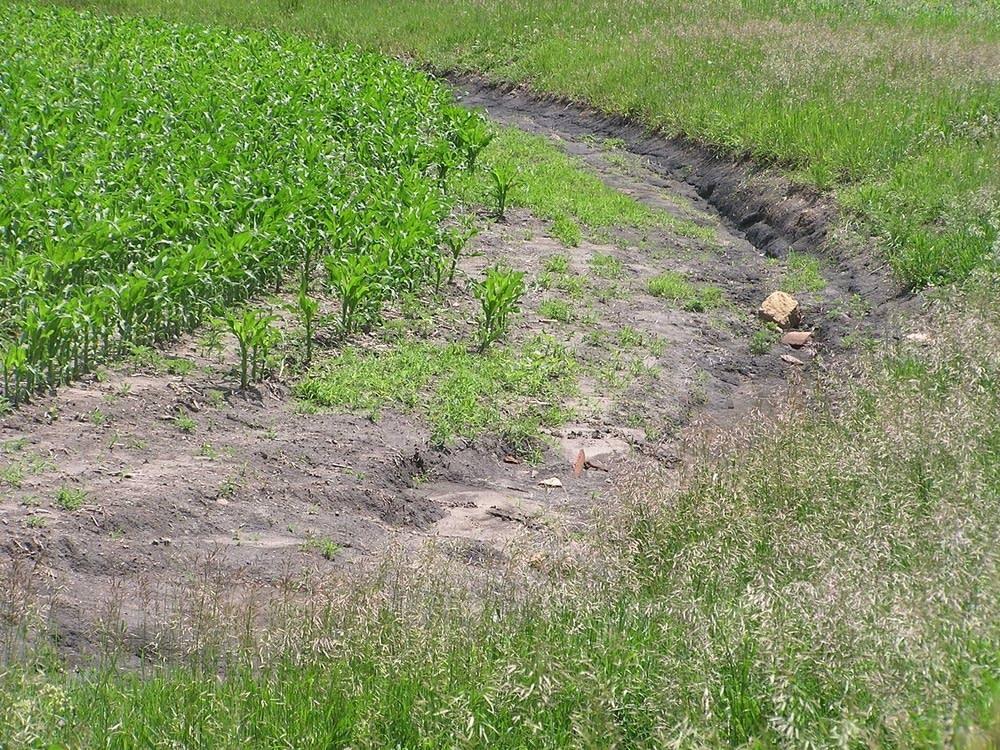 Field rut