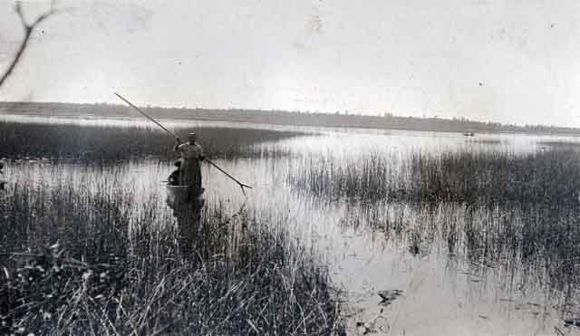 Wild rice harvest in the first half of the century