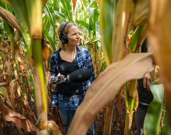 woman with microphone and headphones in corn field