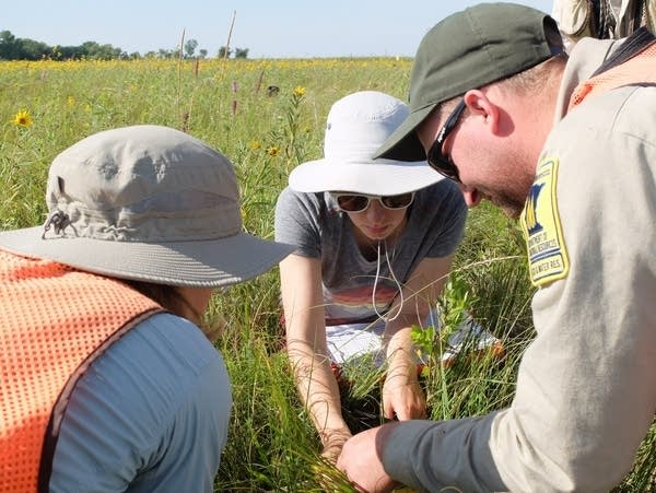 collecting plant data on the prairie