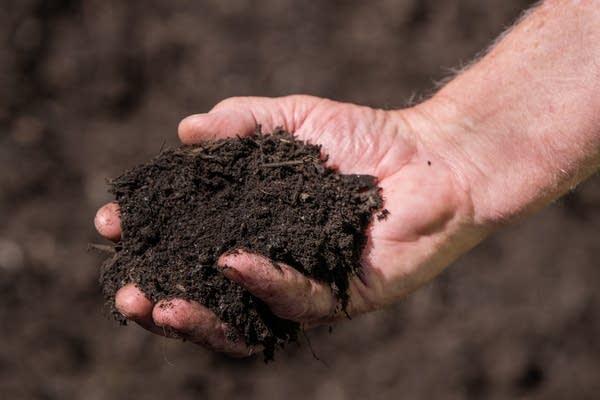A hand holds black soil.