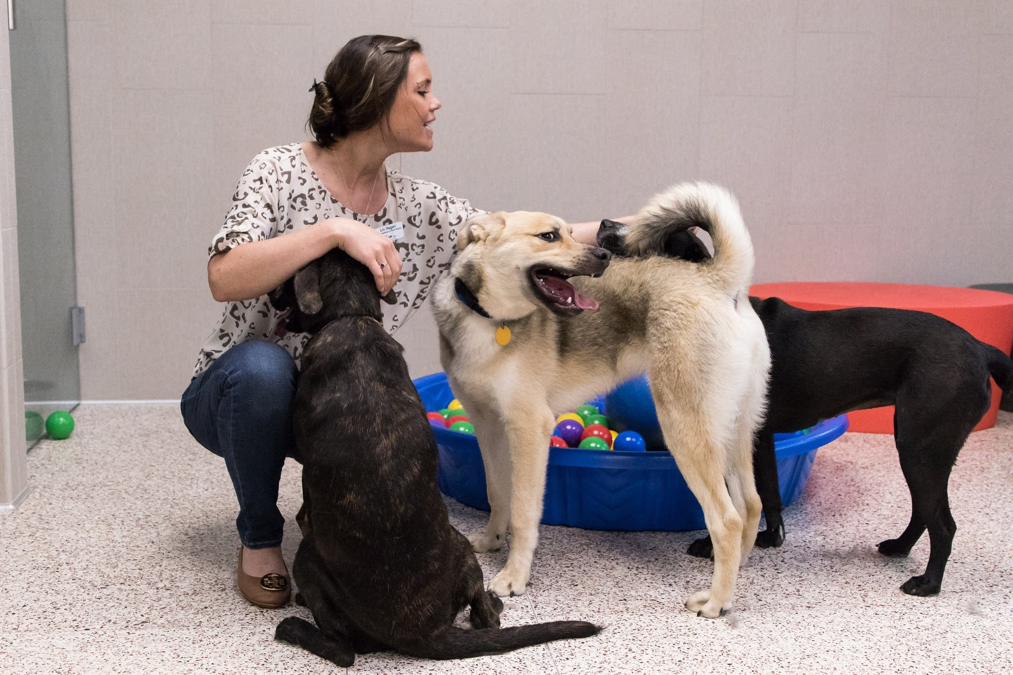 Liv Hagen pets three of the dogs in the new group housing program.