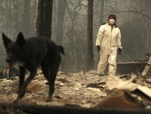 A rescue worker uses a cadaver dog to search for human remains.